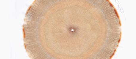 Cromatrografia