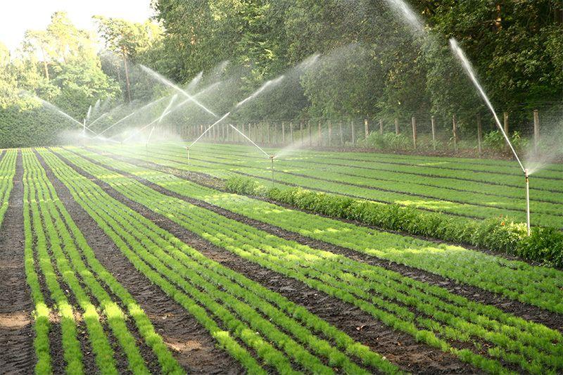 Tecnicas de produccion ecologica